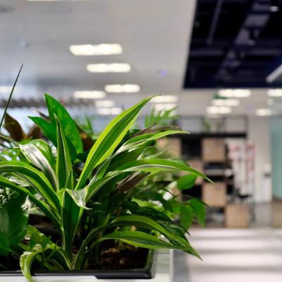 Office Greenery - Trayport